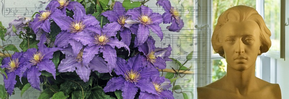 Clematis & Chopin