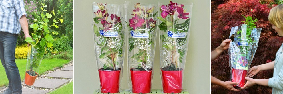Gift bags - packaged plants for gifts