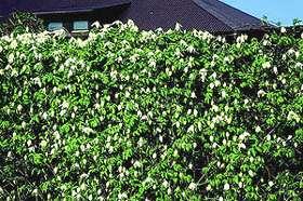 Zaun Begrünen an zäunen und als schutz- und sichtschutzwände