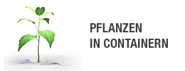 PFLANZEN  IN CONTAINERN