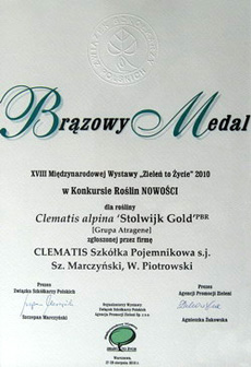 Clematis alpina 'Stolwijk Gold' PBR – brązowy medal